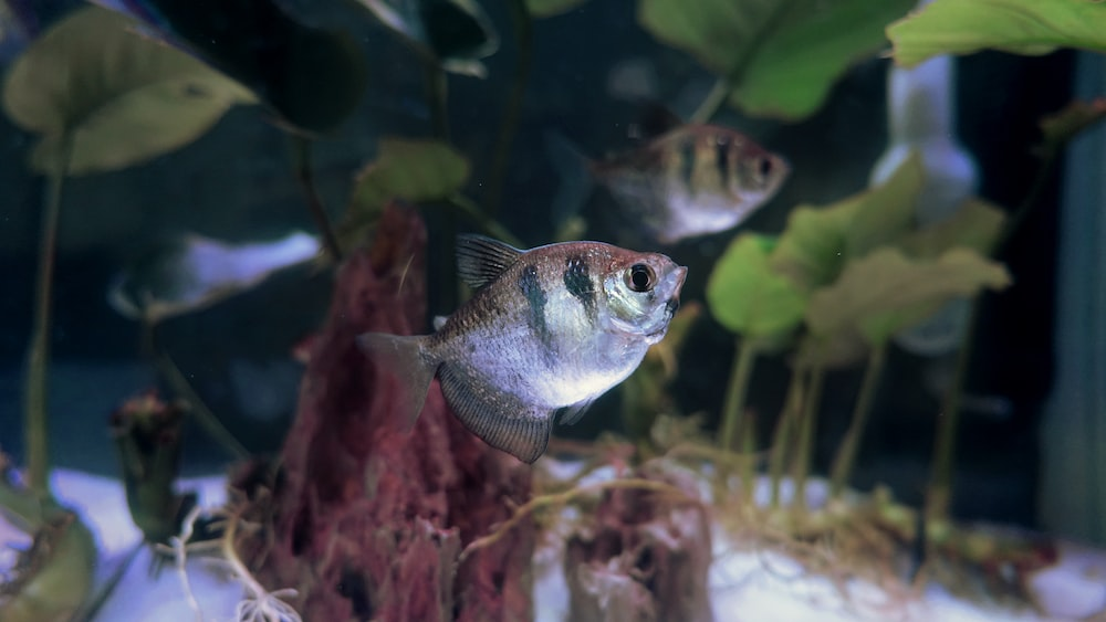 gray and black fish close-up photography