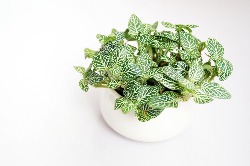 green plants in bowl