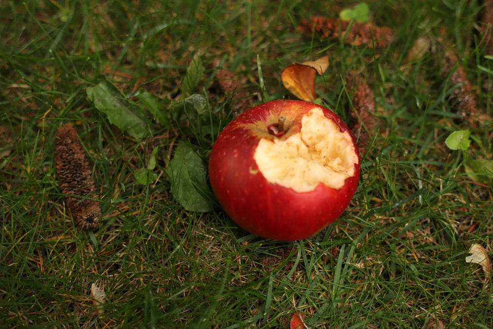 red apple fruit on green grass during daytime