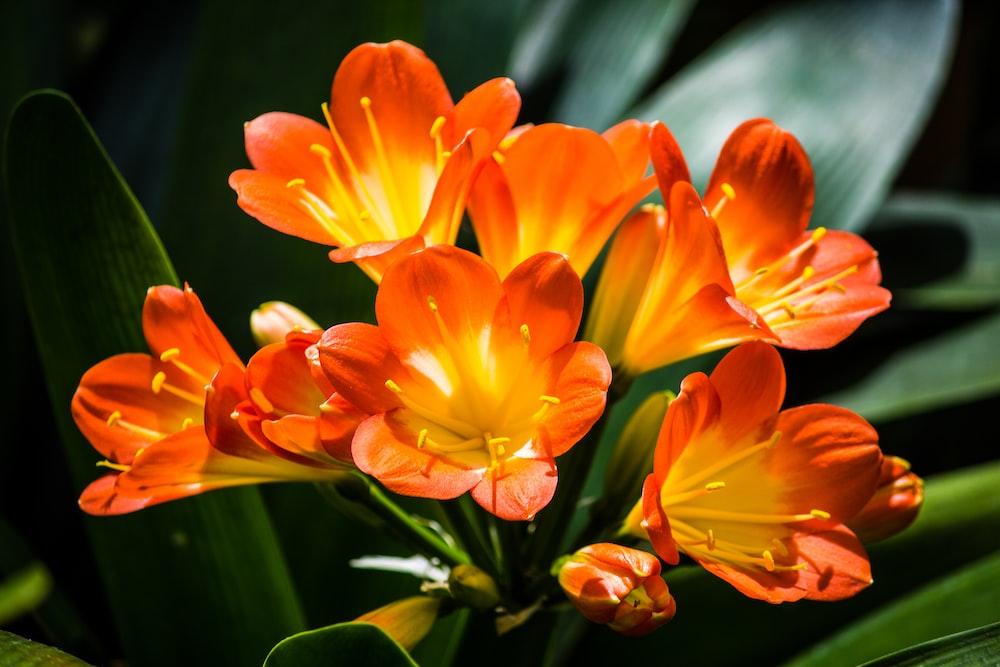 orange petaled flower lot close-up photography
