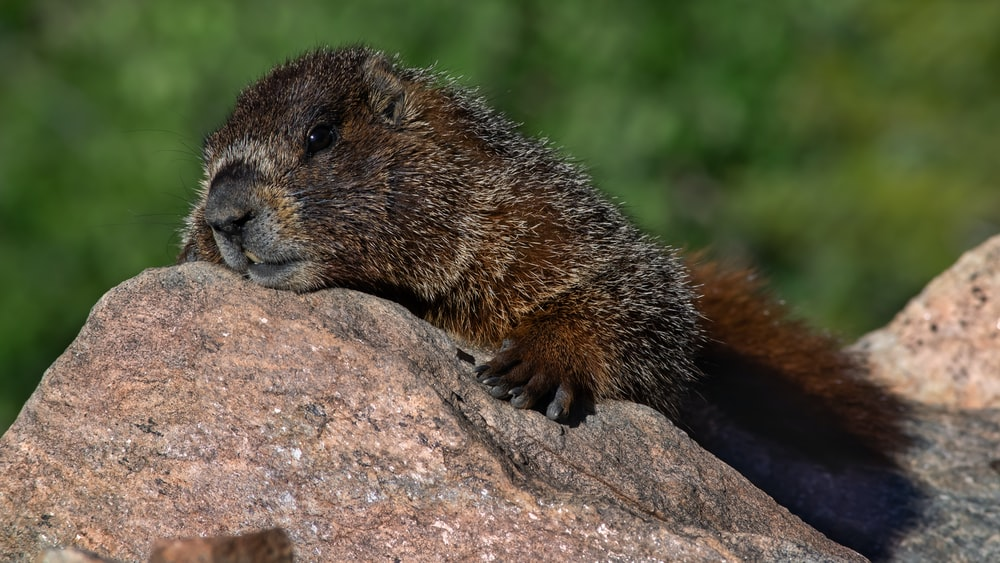 brown animal on rock formation