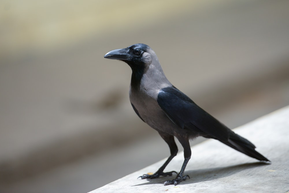 black and grey bird in close-up photography