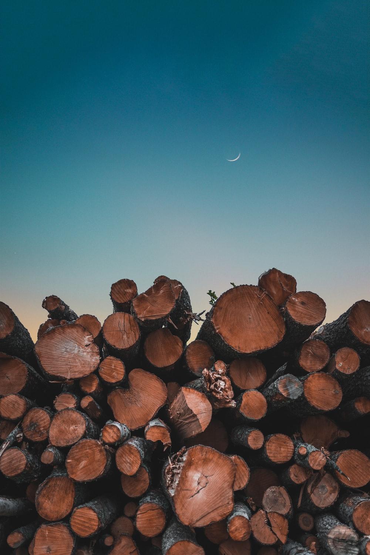 tree logs under blue sky