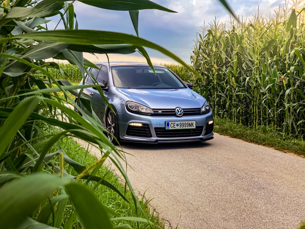blue Volkswagen Polo running between corn fields