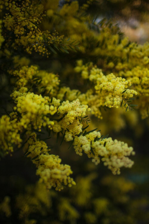 yellow plant macro photography