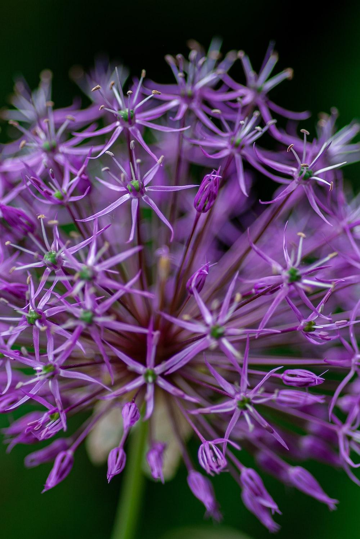 macro photography of purple-petaled flower]