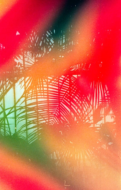 Tropical leaves - Shot on 35mm, Leica MDa with Dubblefilm Jelly film