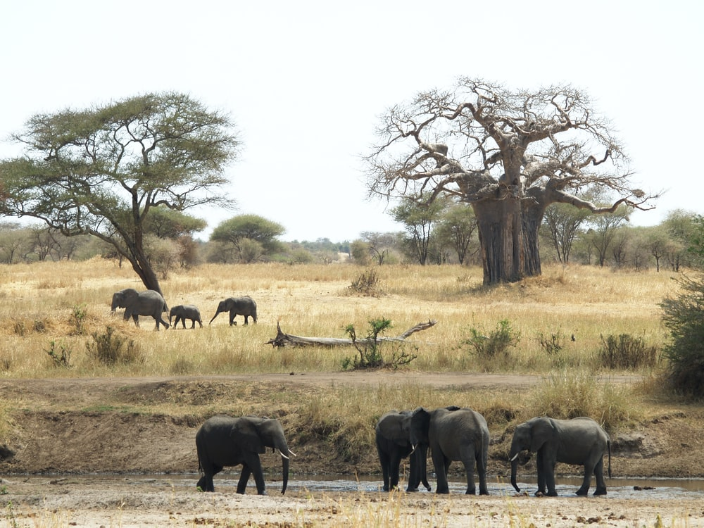 elephants on grass field near trees during daytime