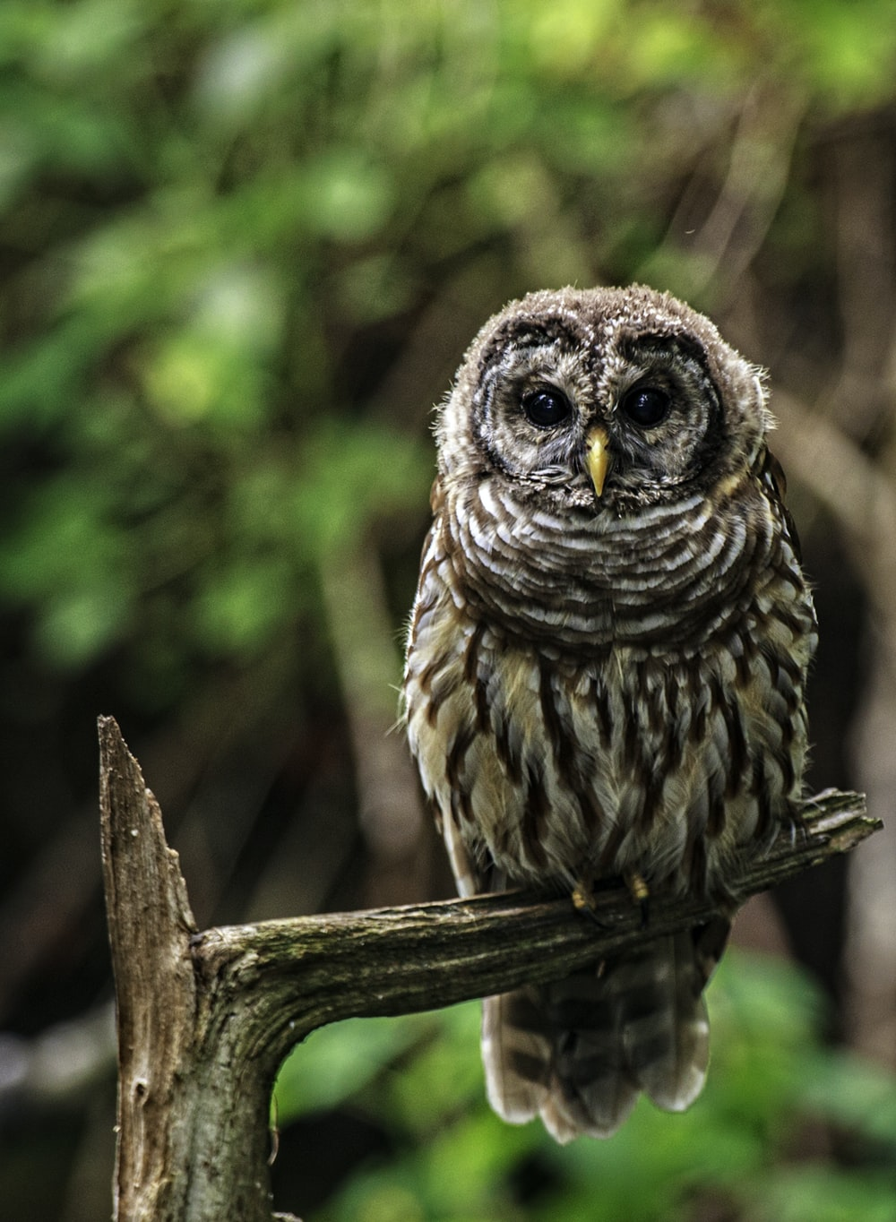 selective focus photo of owl