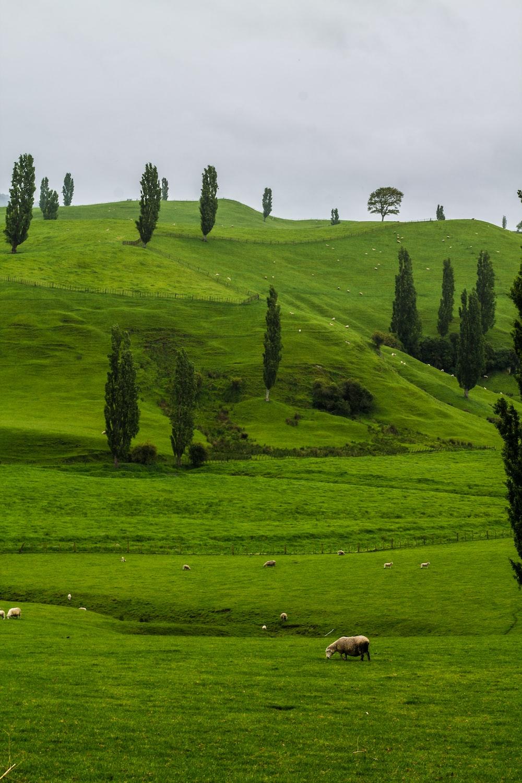 trees in farm