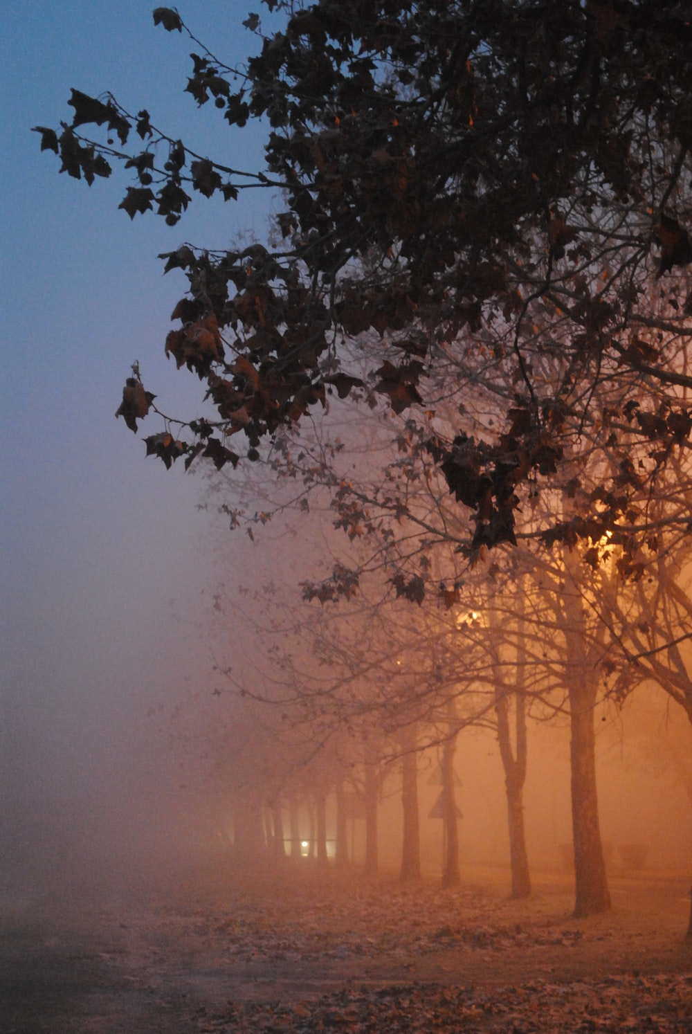 trees with fogs