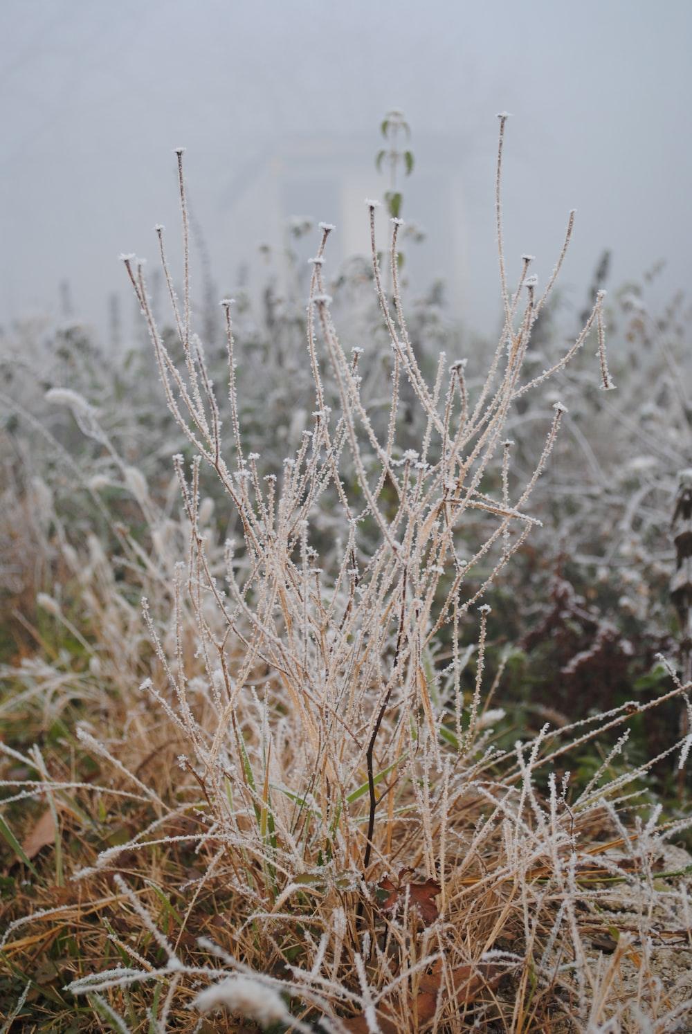 beige plants