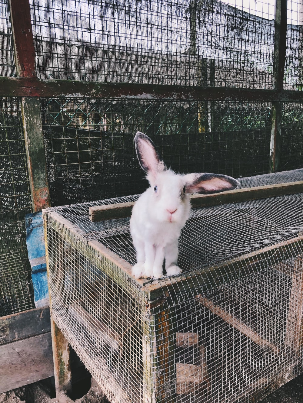 white rabbit on cage