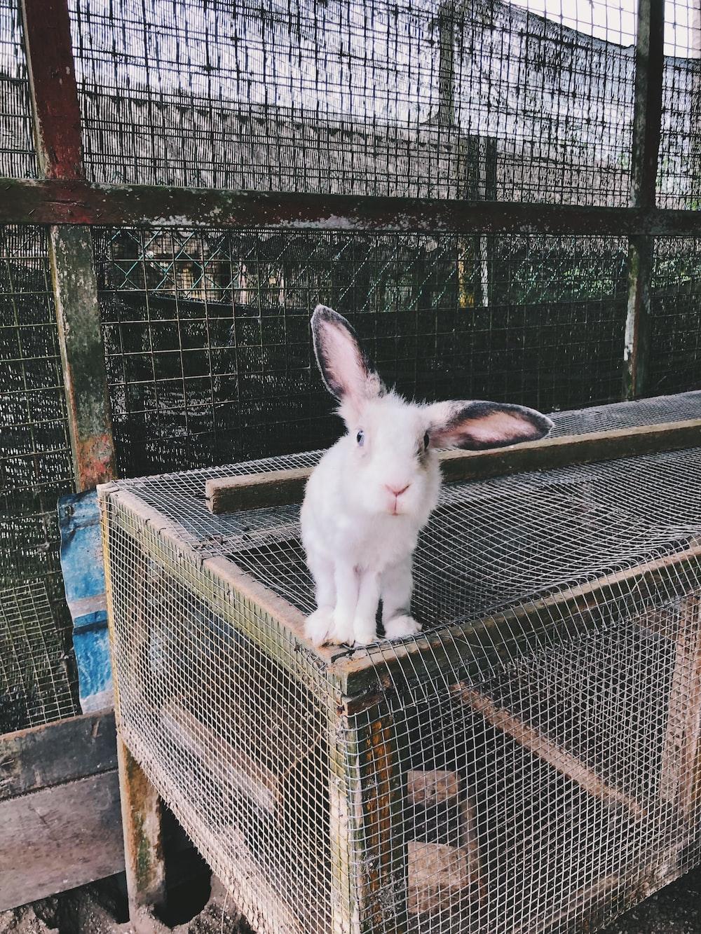 white rabbit on cage