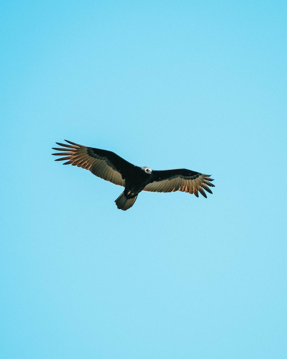 black and grey eagle on flight under clear blue sky