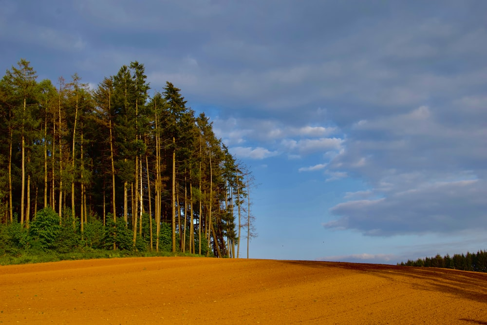 green trees and dirt field during day