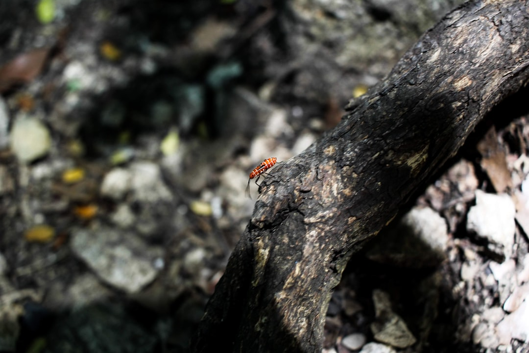 Insect in a tree branch.