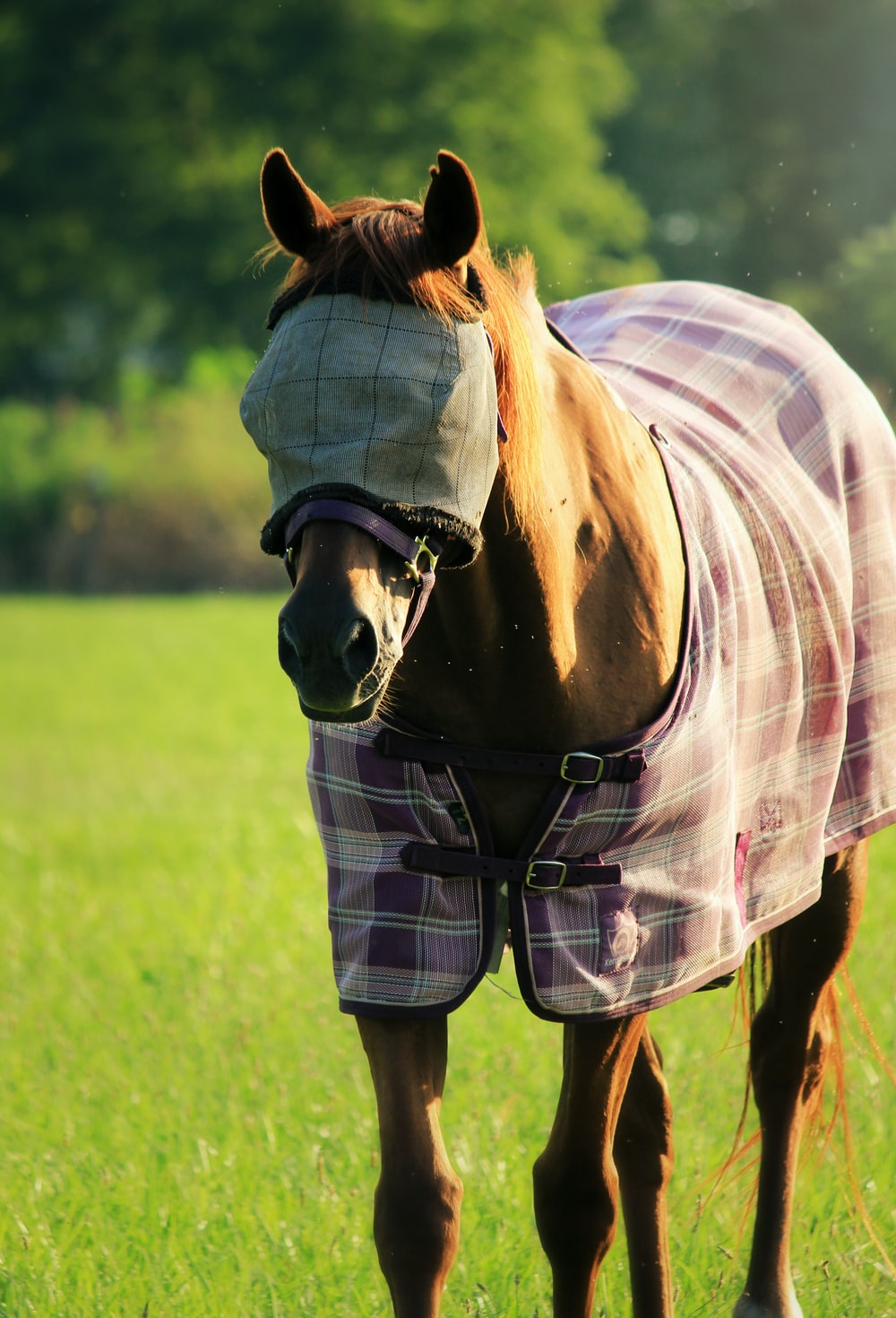 brown stallion horse with cover in eyes