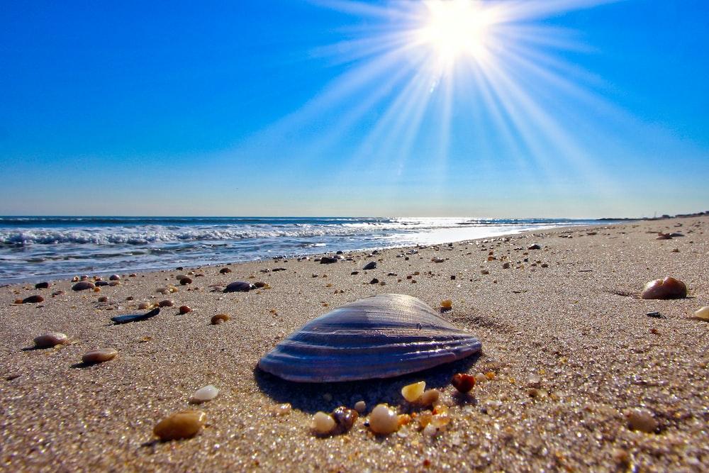 black clam shell