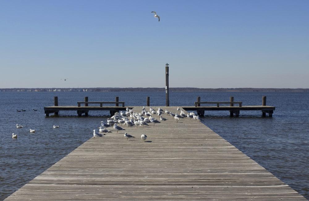 birds on dock during daytime
