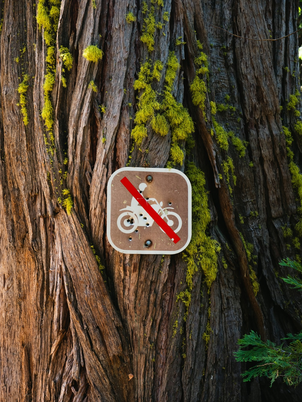 no riding of motorcycle sign on tree trunk