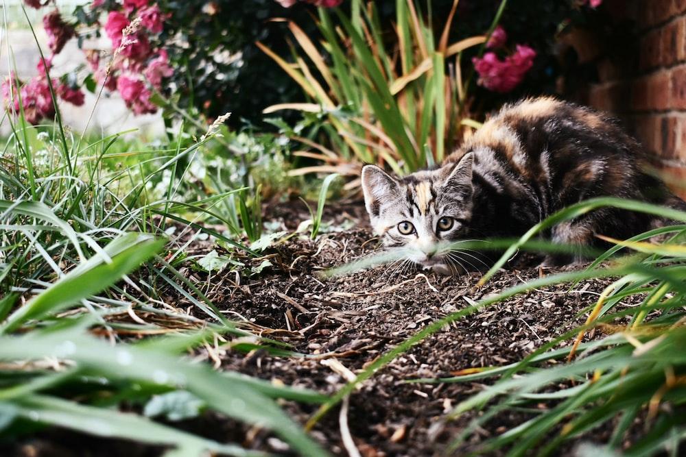tortoiseshell cat on ground