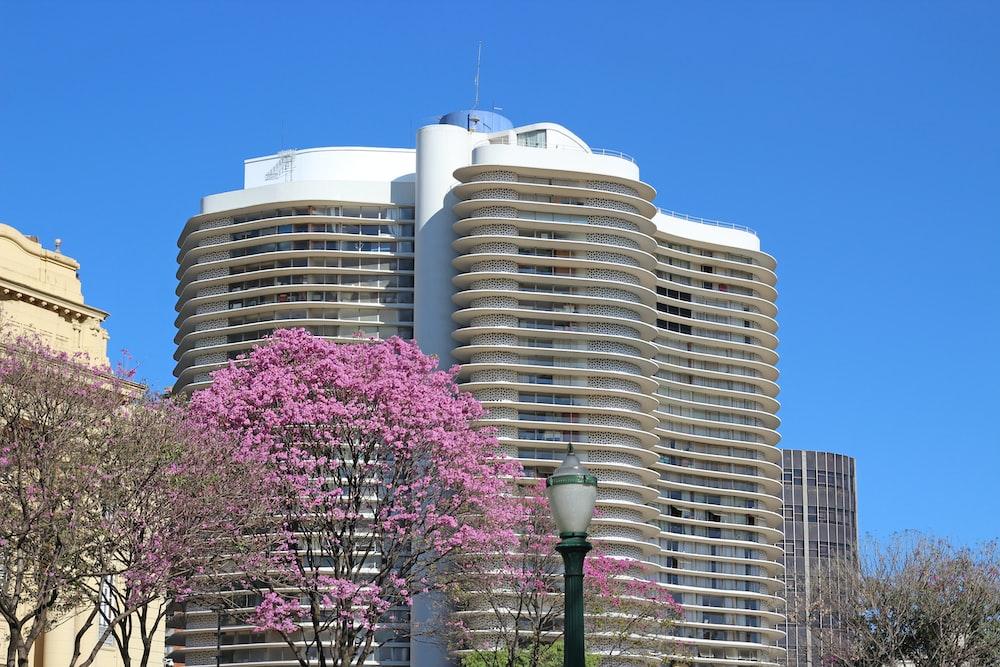 pink tree near building