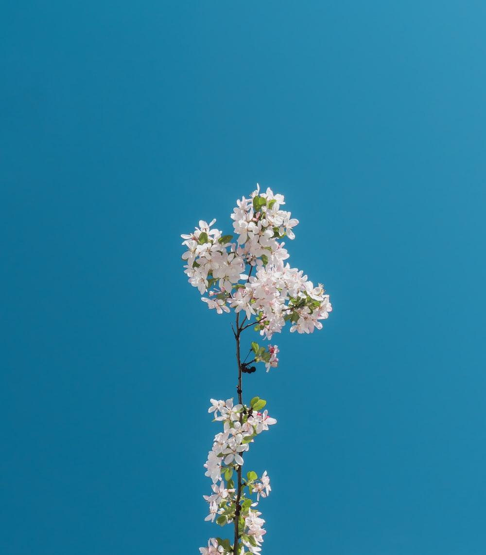 blooming white petaled flowers