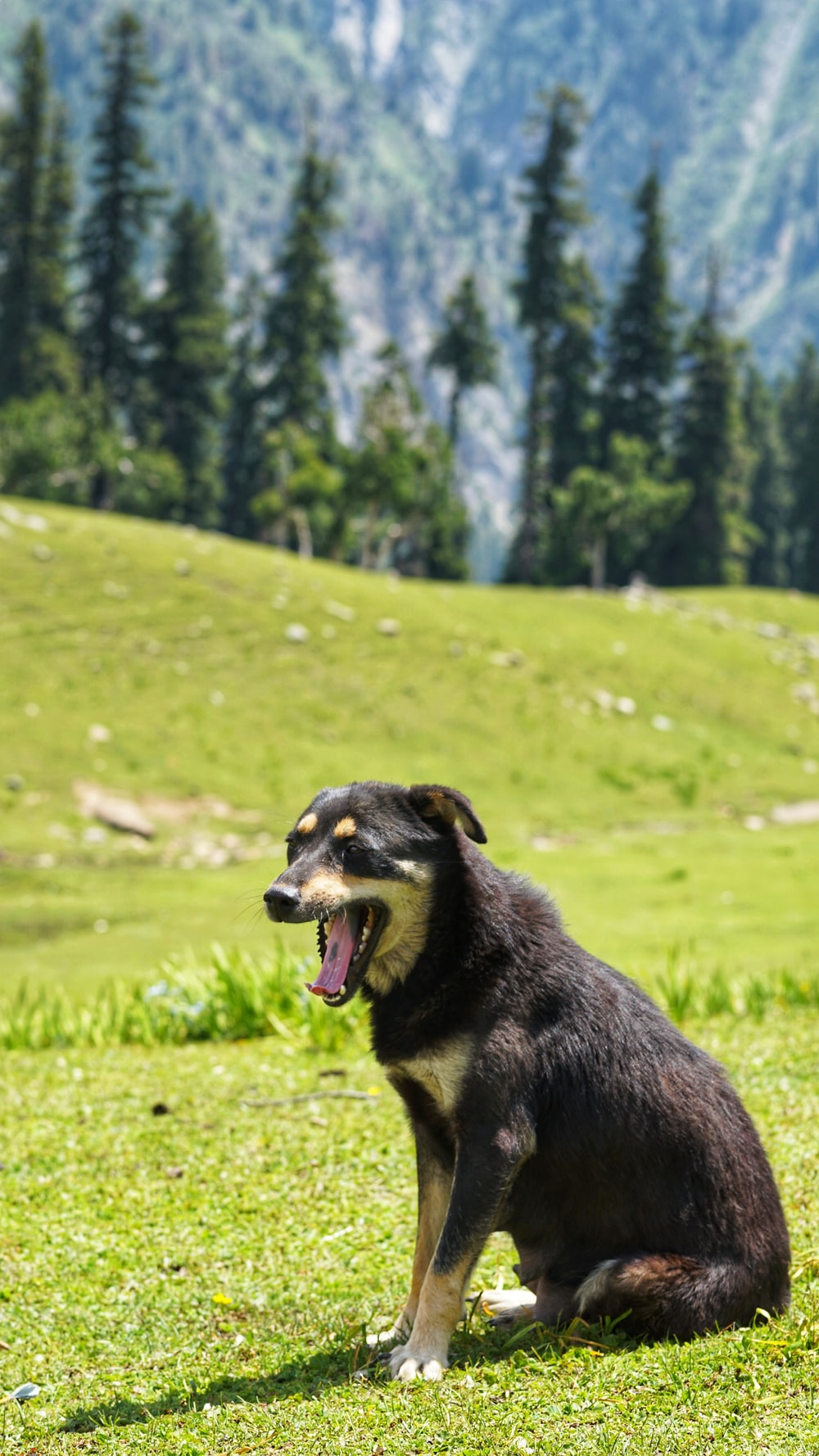 medium-sized dog sitting on lawn