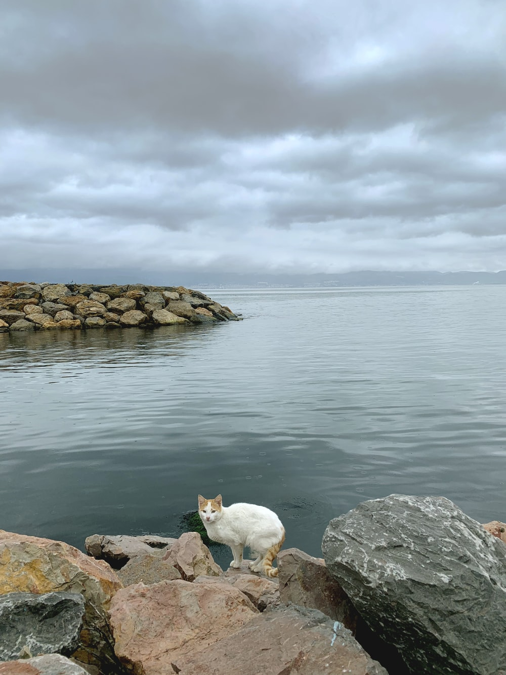 white cat on rock formation