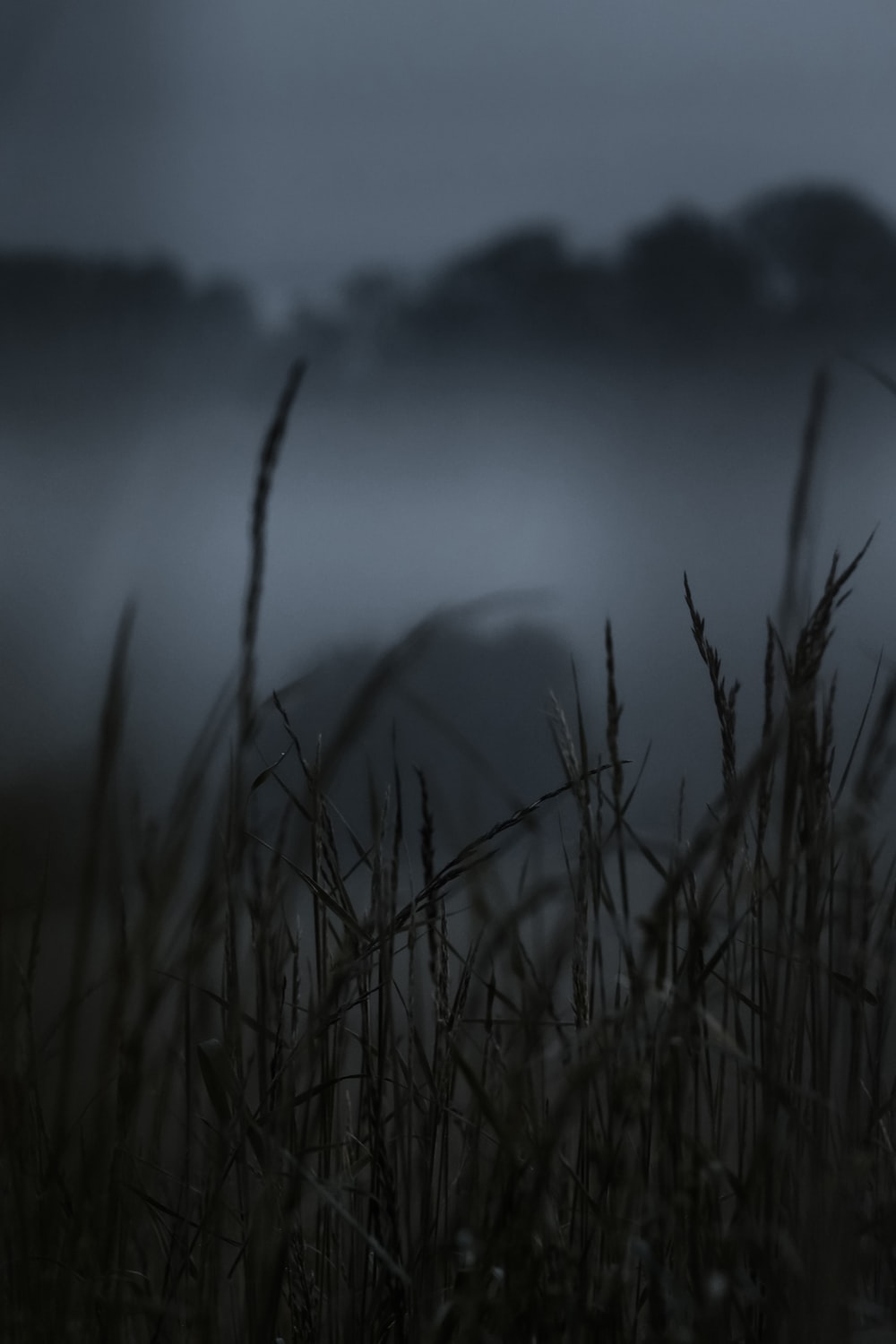 grasses surrounds with fogs