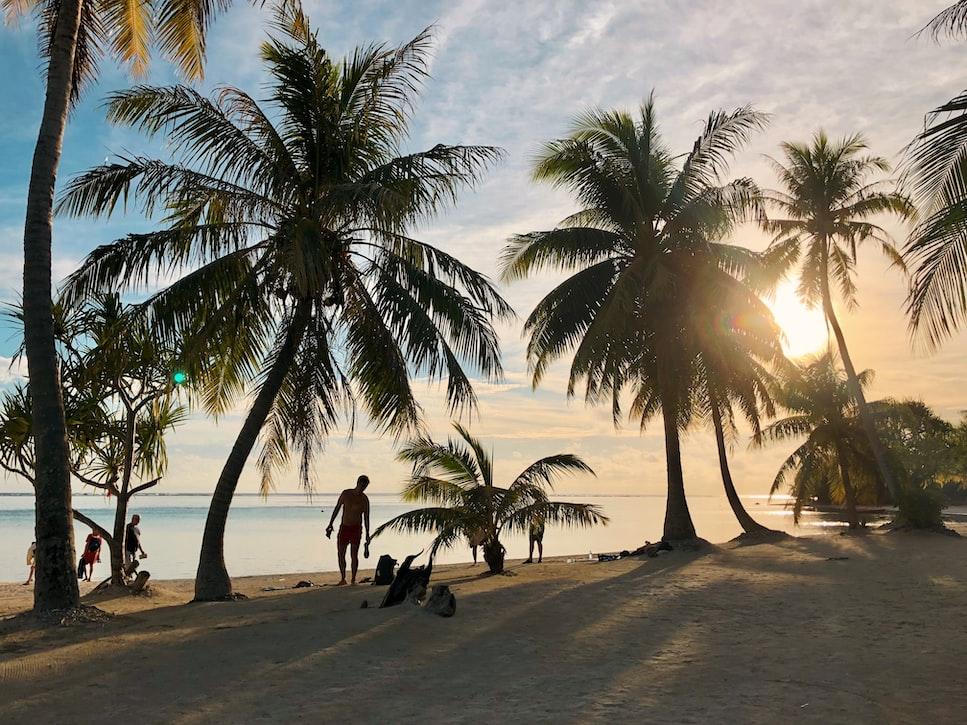 Las palmeras de Bora Bora