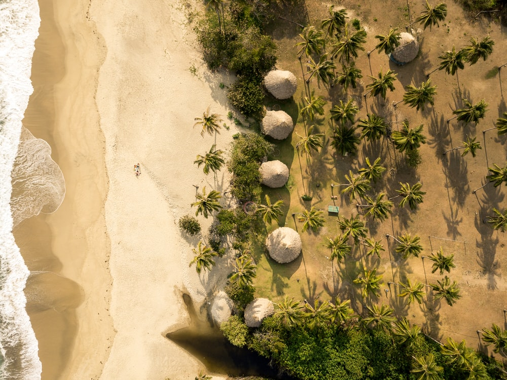 aerial photo of seashore with green palm trees during daytime