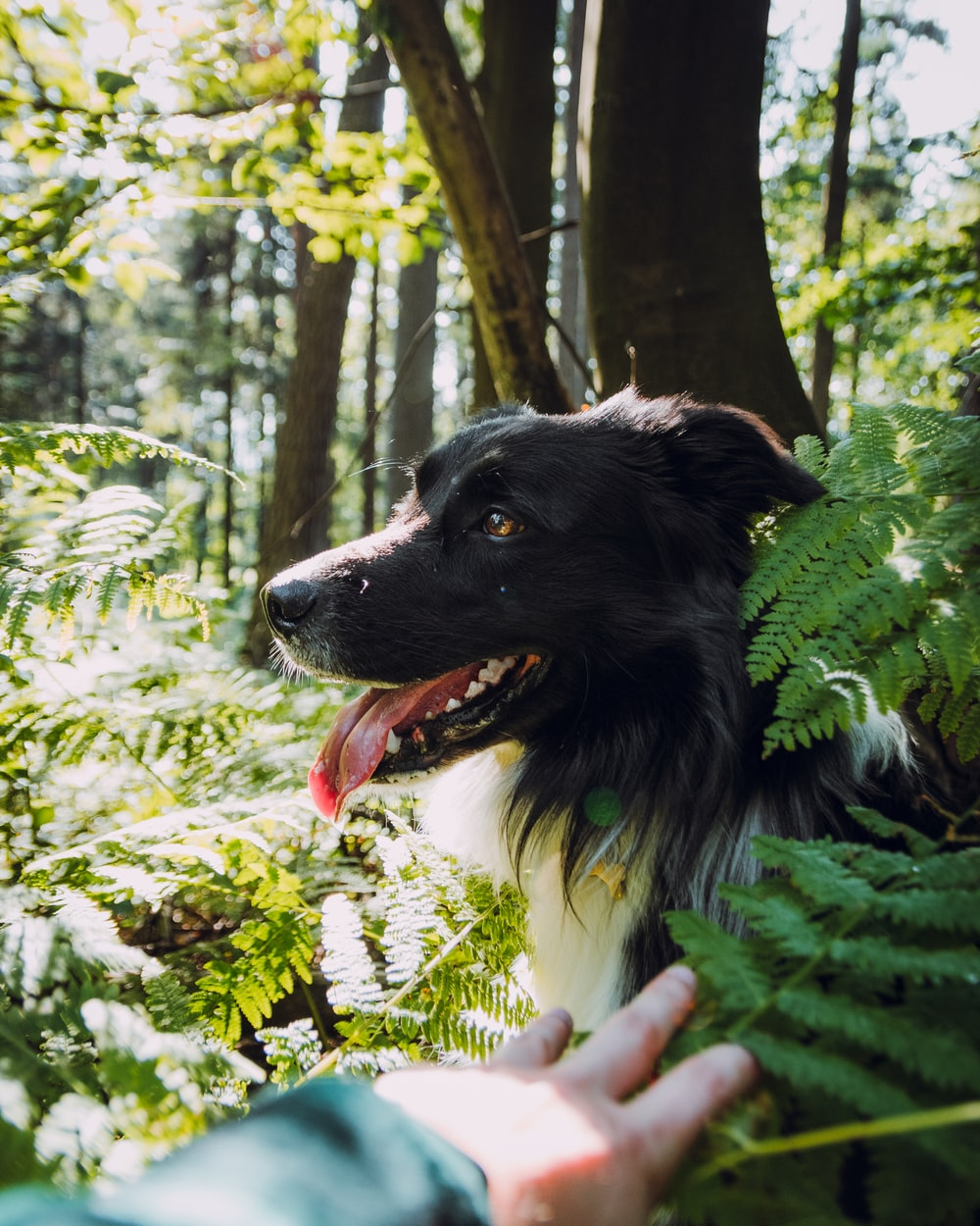 black and white dog surrounded with plants