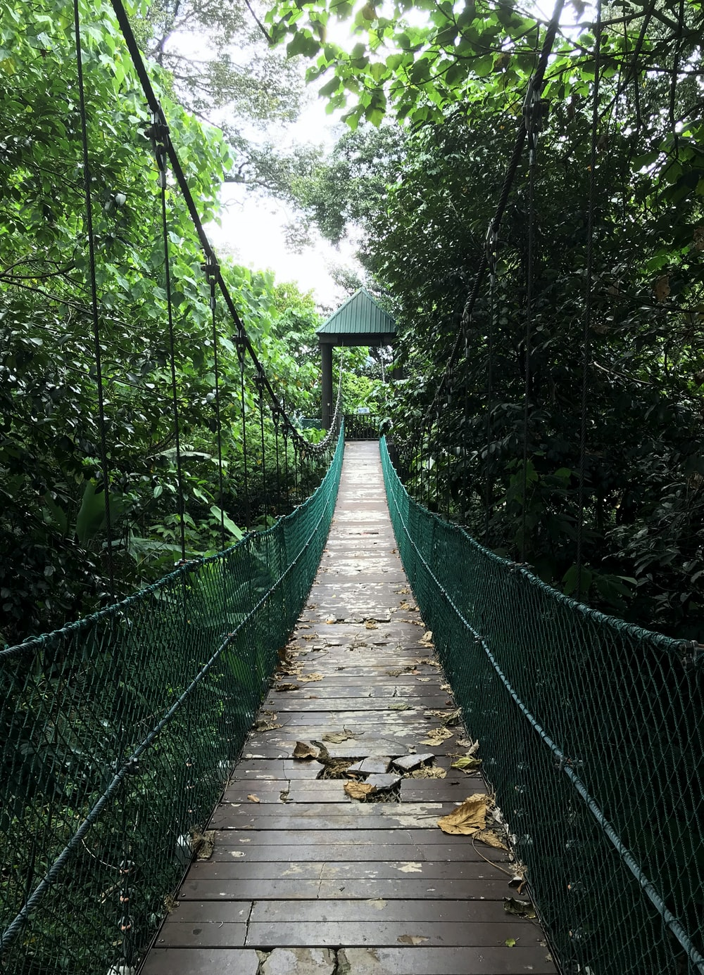 brown hanging bridge