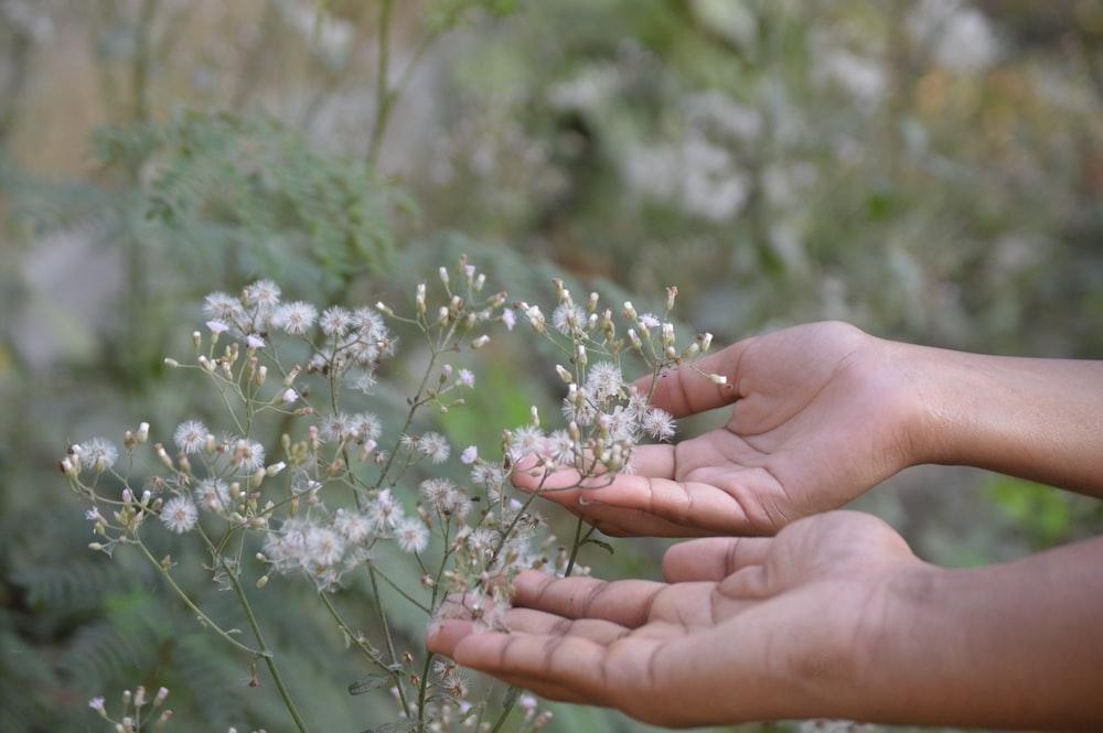 white cluster petaled flower