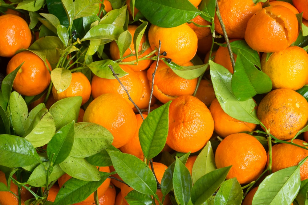 tangerine fruits