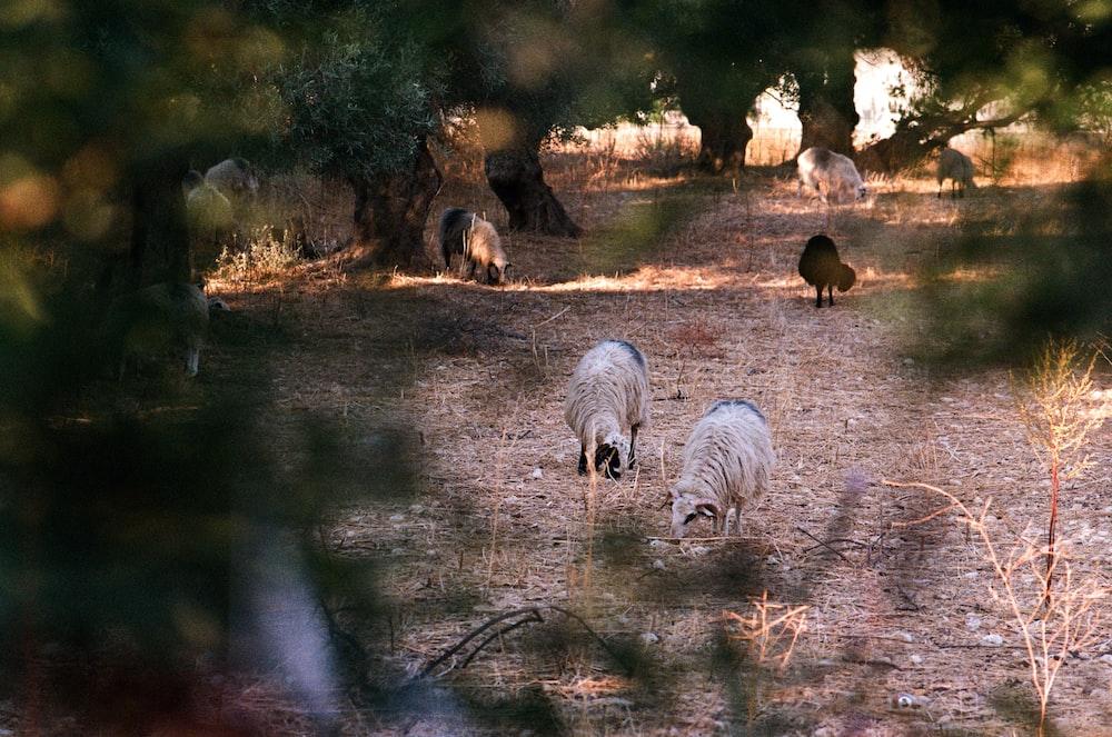 animals on soil ground near trees