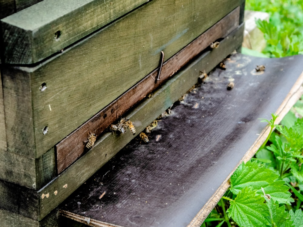 bees coming out of beehive