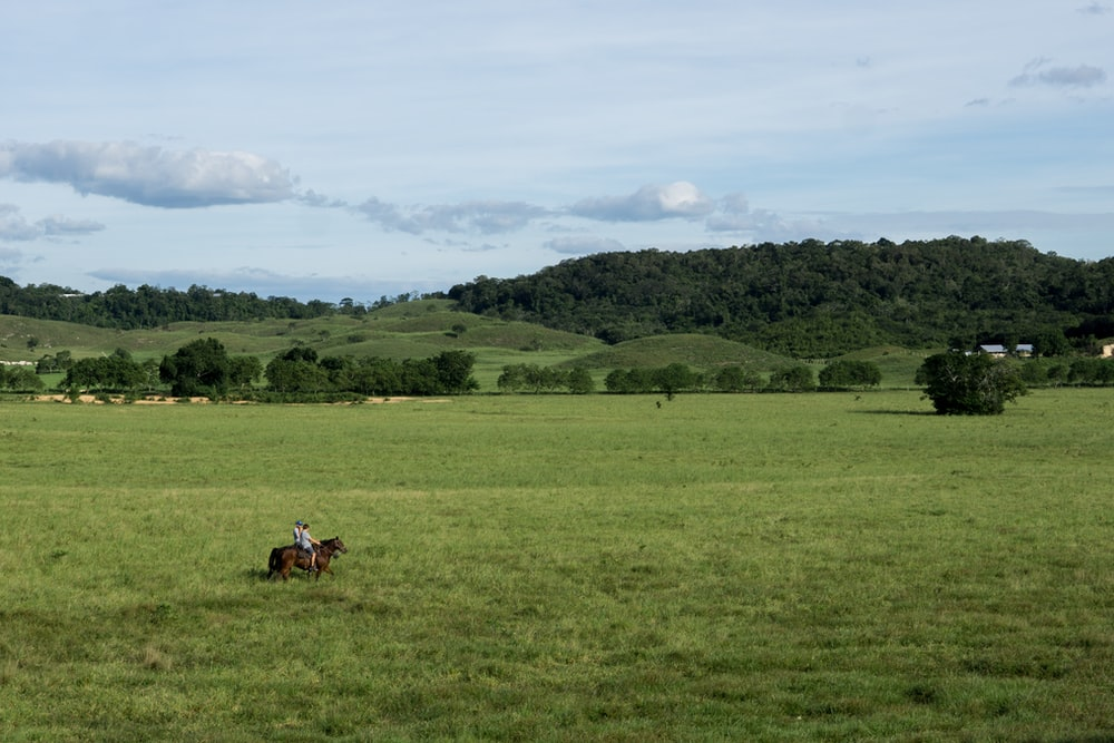 person riding horse on green field
