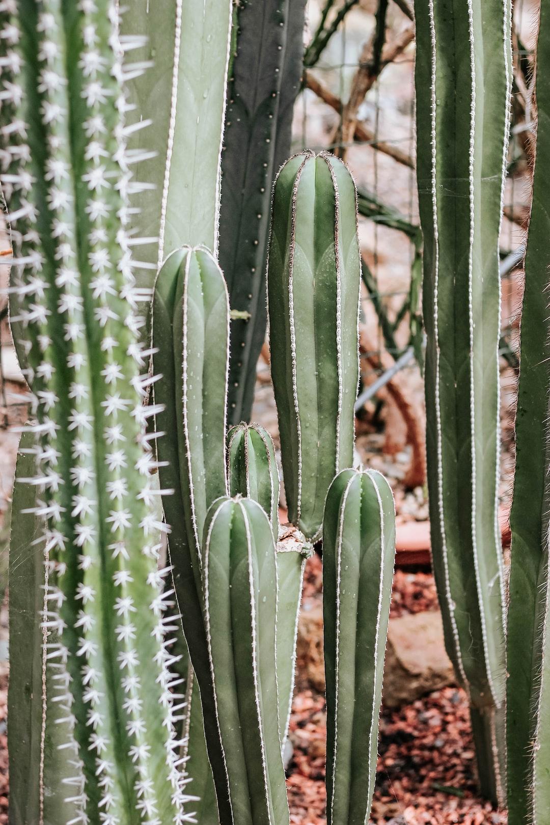 Cacti, Arboretum and Botanical Garden Trompenburg, Rotterdam The Netherlands