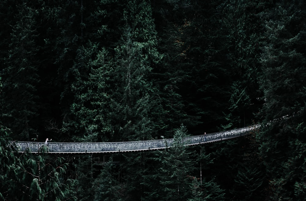 gray cable bridge on forest