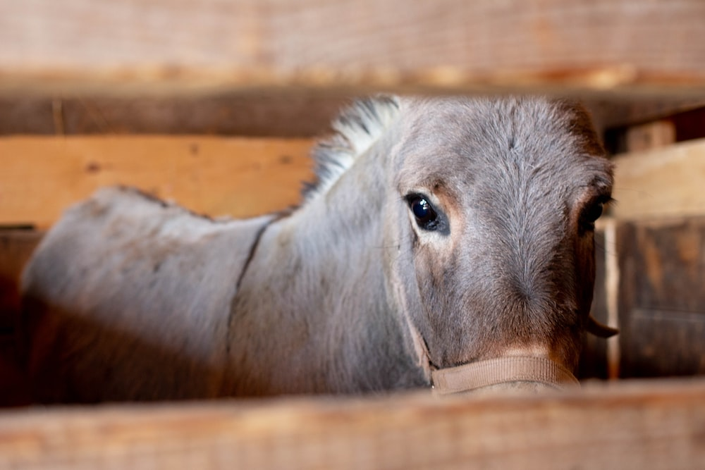 brown horse inside cage