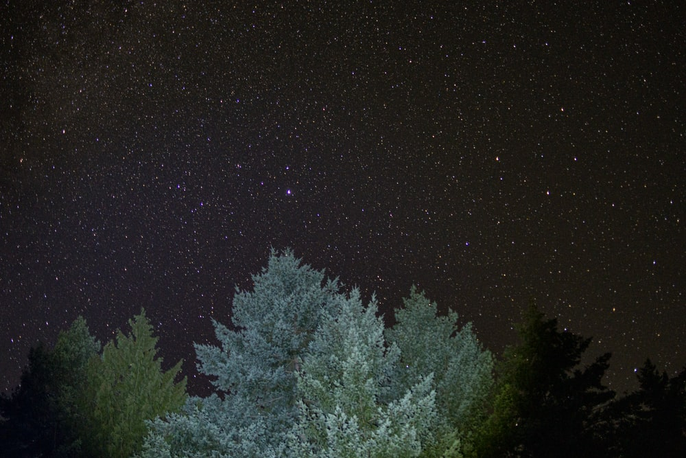 green-leafed tree under clear night sky