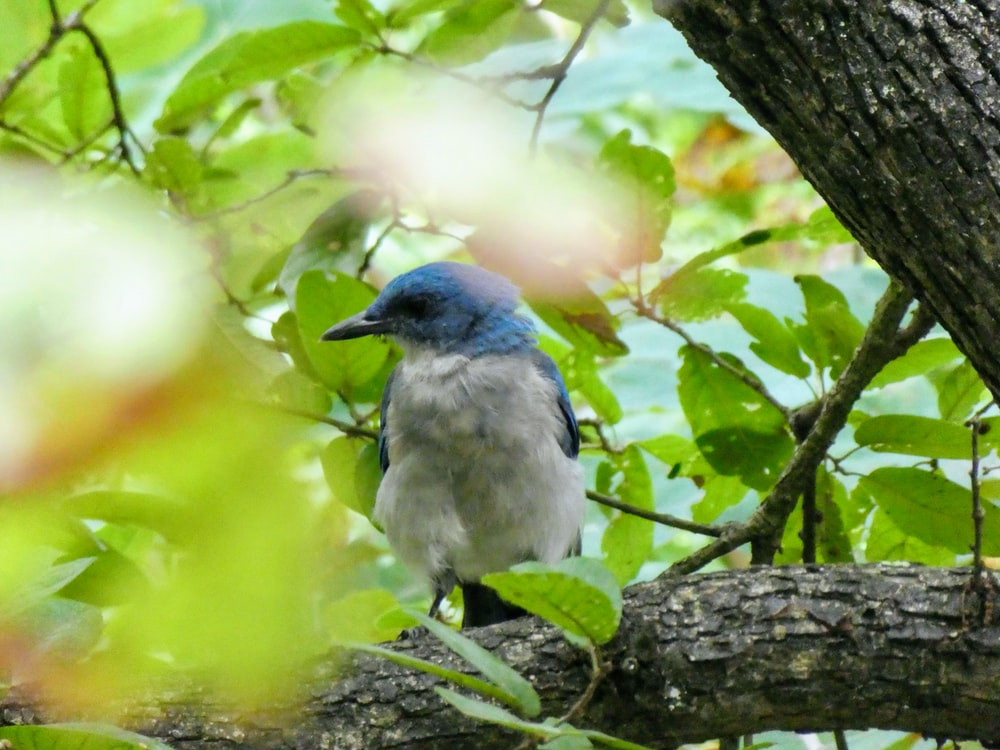 selective focus photography of perching blue and white bird
