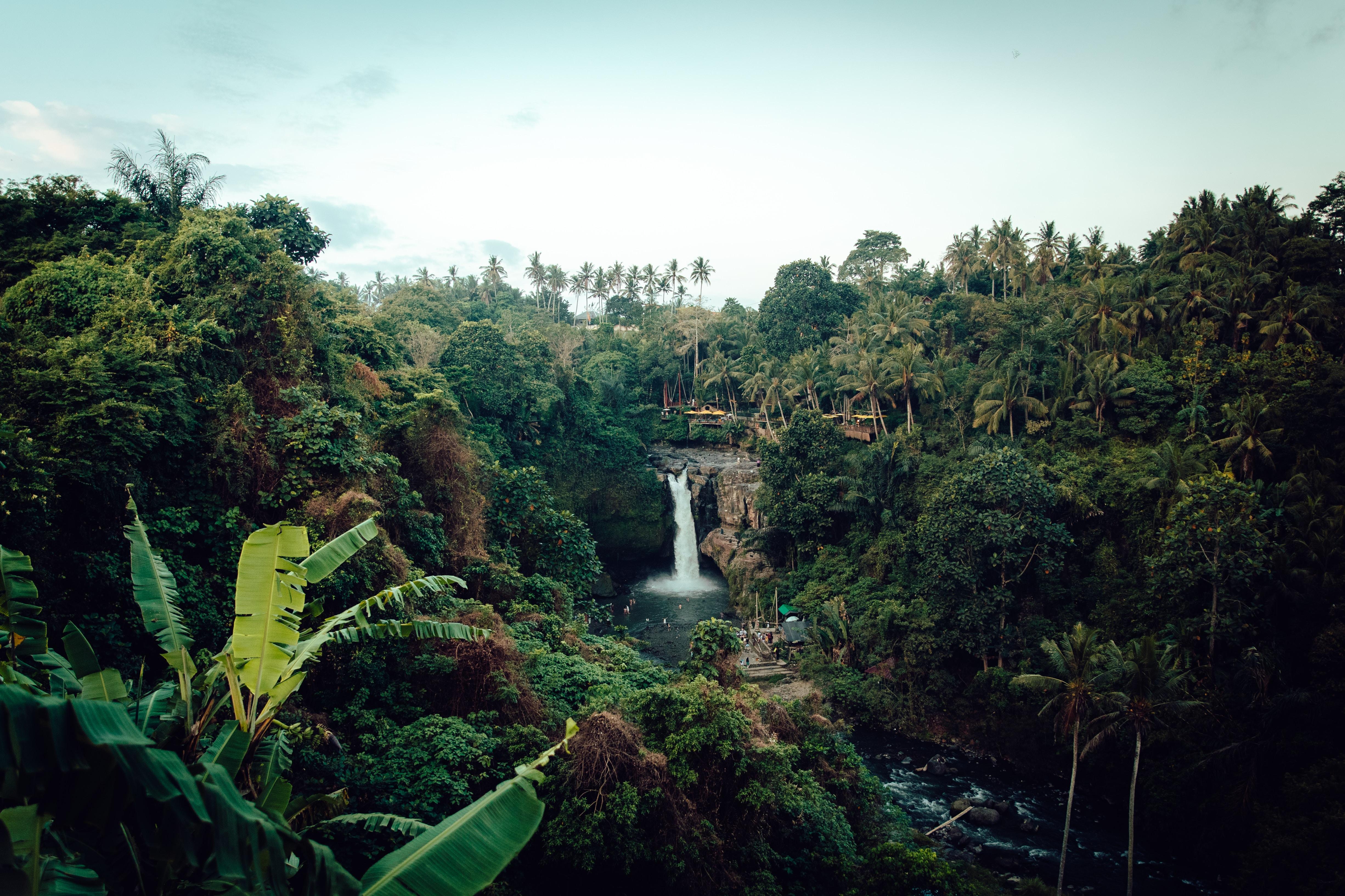 Levuka Rainforest Recreation