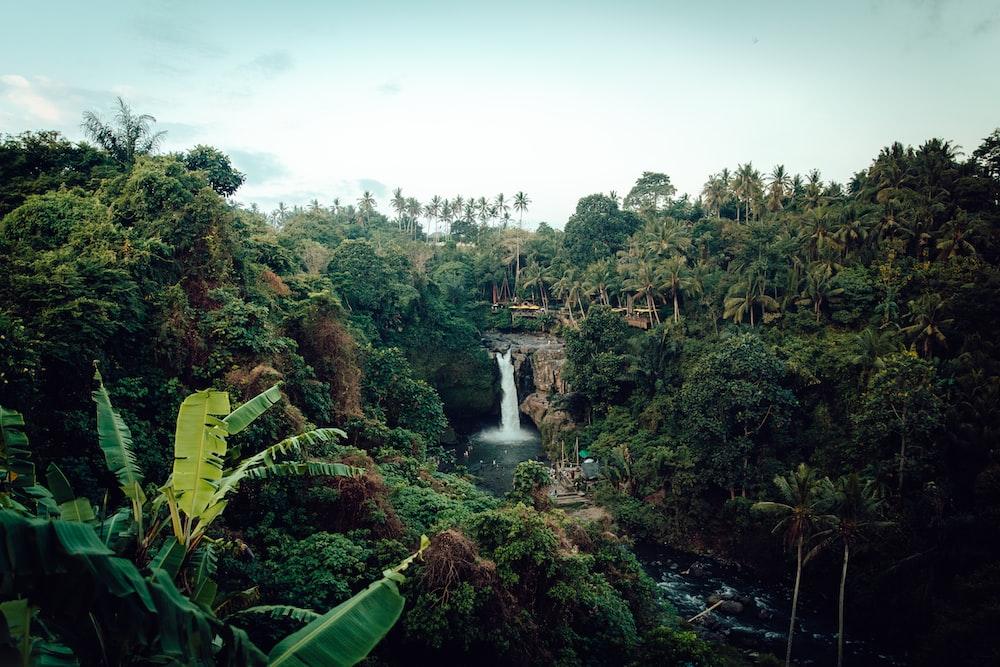 waterfalls beside trees