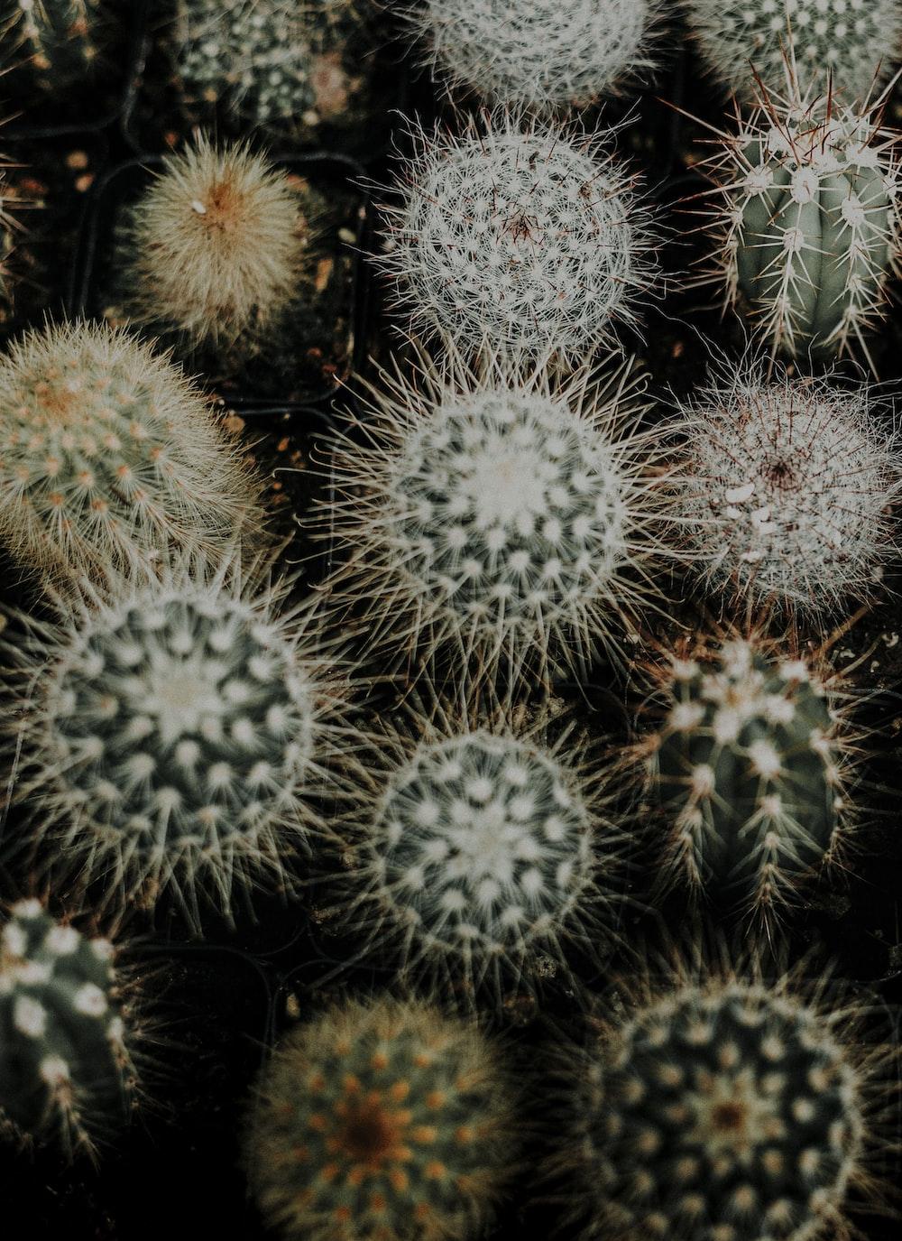 green cactus plant lot