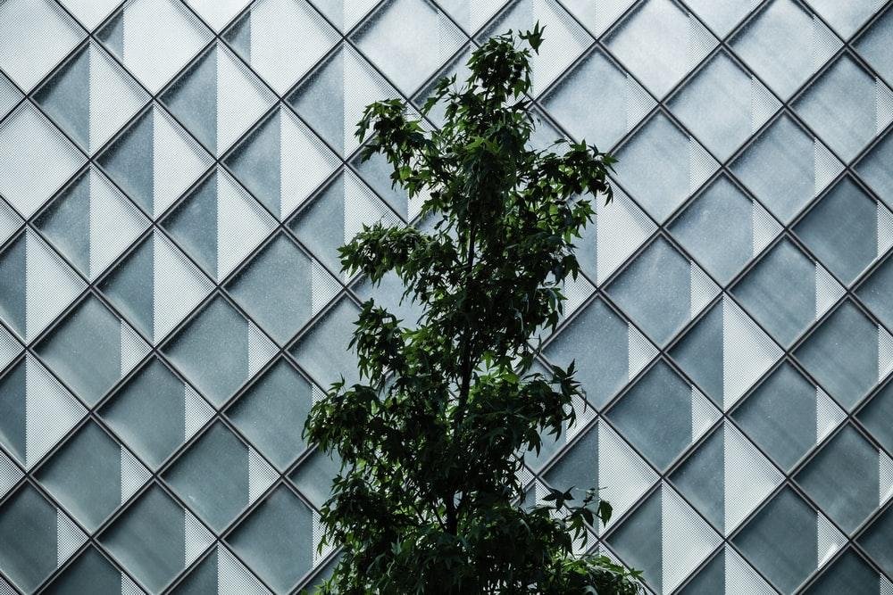 green-leafed tree near building