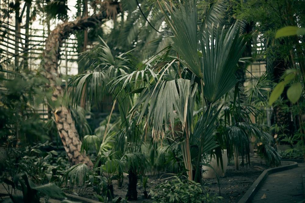 green palm plants beside tree